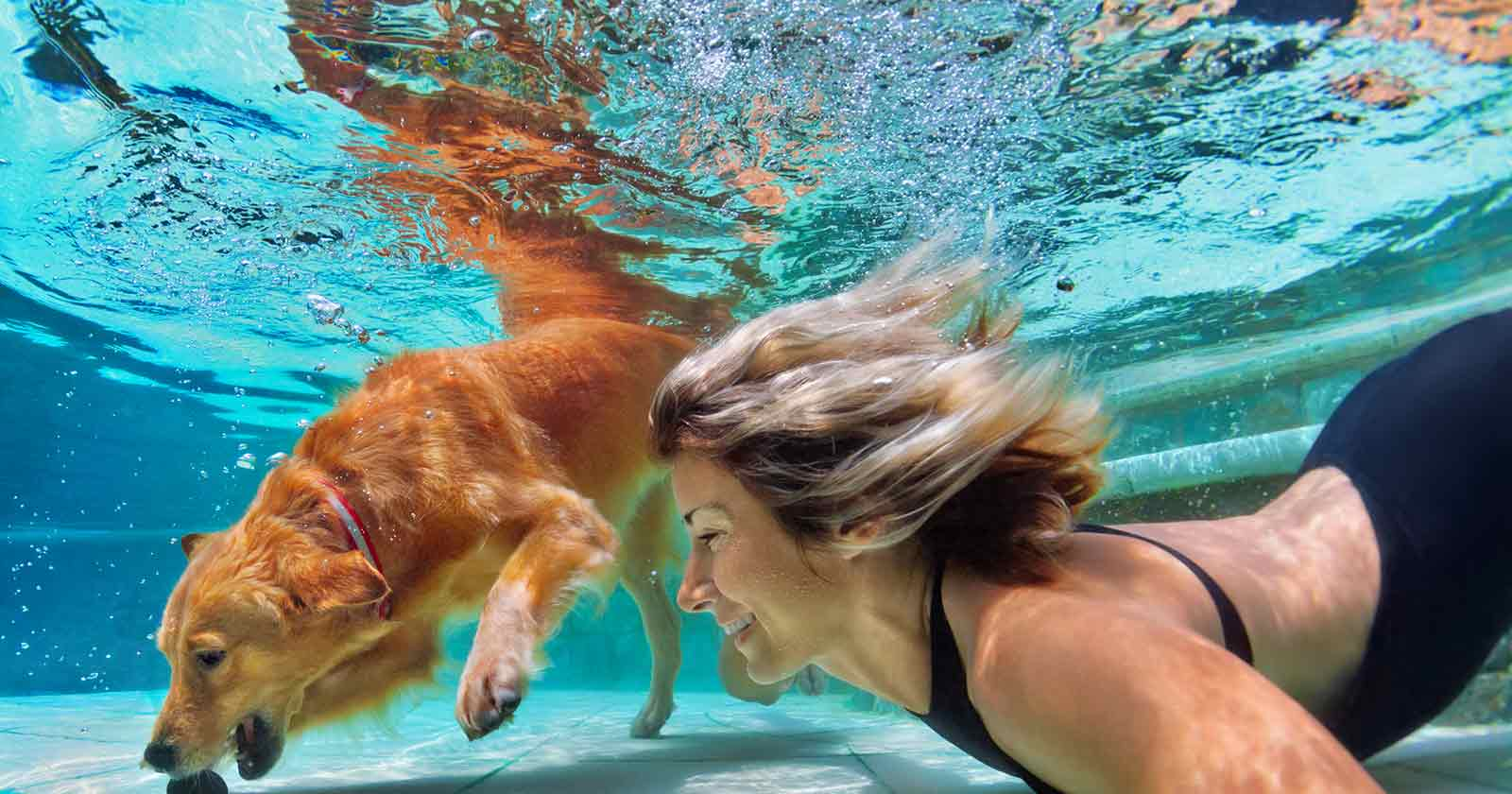pool safety pets who love water